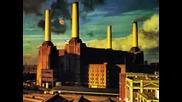 Tribute Pink Floyd
