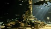 Amazing Aquarium - Oklahoma