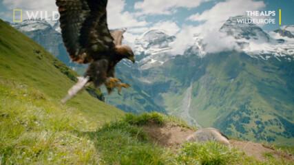 Смъртоносният мах на криле | Дивата Европа | NG Wild Bulgaria