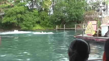 Атака от бяла акула