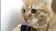 Коте си играе с прахосмукачка