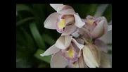 Орхидея - Машина на времето