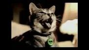 радостната котка
