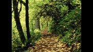 Иван Пънев - В гората има дърво яворово