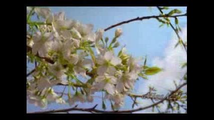 Песента от Седемнайсет мига от пролетта ( Авторски )