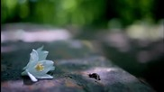 Hernan Cattaneo Soundexile - Japanese Snowbell (guy J Remi