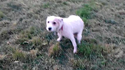 Отново на разходка в парка с любимото куче