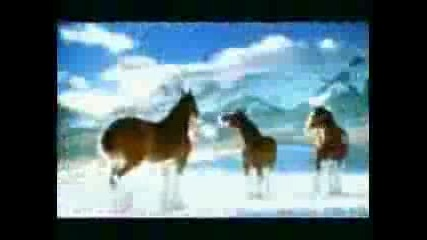 Шантави Коне - Реклама