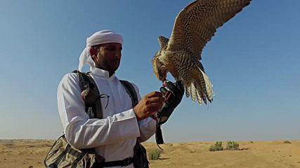 Ловът с грабливи птици (