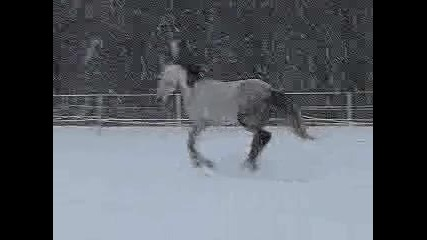 18 декември 2009 - Голд Мен