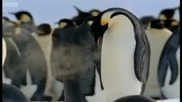 Императорските пингвини - Bbc
