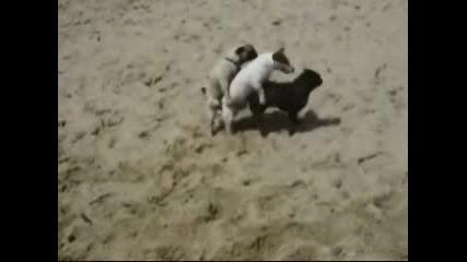 Кучешко Секс Трио
