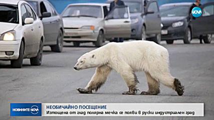 Полярна мечка се появи в руски индустриален град