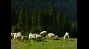 Tibet Music Tsegoen - 12