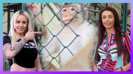 Затвориха секс бомби в клетката на маймуните