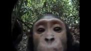 Наблюдение В Джунглата!