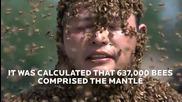 Китаец постави рекорд за най-много пчели по тялото си -637 хил.!