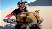 Моторист вози кучето си, докато се забавлява в дюните