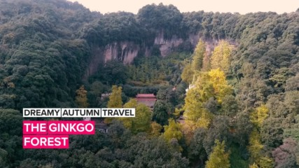 Dreamy Autumn Travel: China's gorgeous Ginkgo forest