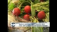 Букети от зеленчуци се оказаха най-търсени за женския празник в Пловдив