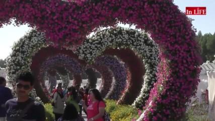 Миракъл Гардън Дубай - цветните градини на пустинята