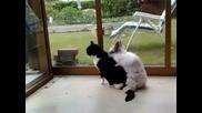 Зайче скача да опъва коте! Много смях!