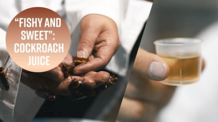 Cockroach juice: Your new health drink?