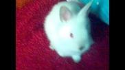 My Bunny - Глезла