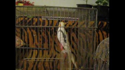 Папагалът Коки