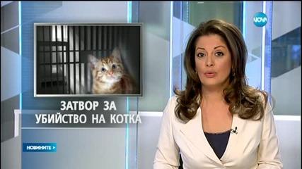 Мъж от Варна влиза в затвора за убийство на котка