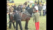 коне във Враца - 01.11.2009г - Моята Гордост