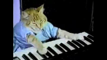Коте свири на пиано