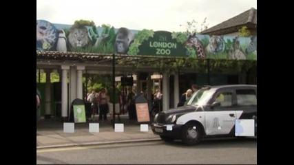 Лондонският зоопарк претегли обитателите си