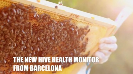 Bee Innovations: The high tech hive spying on bees for science