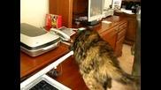 Котка Се Плаши От Принтер - Супер Смях