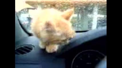 Котенце Се Вози В Кола