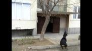 Къде е котката!