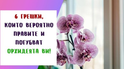 6 грешки, които вероятно правите и погубват орхидеята ви!