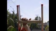 Бевърли Хилс Чихуахуа 2 Бг Суб. ( Beverly Hills Chihuahua 2 - 2011) Част 2/3