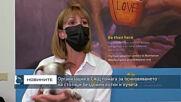 Организация в САЩ помага за осиновяването на стотици бездомни котки и кучета