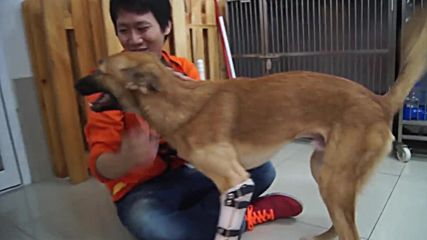 Thailand: Legless dog gets new leash of life with prosthetic pair