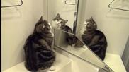 Котето Мару пред огледалото ..