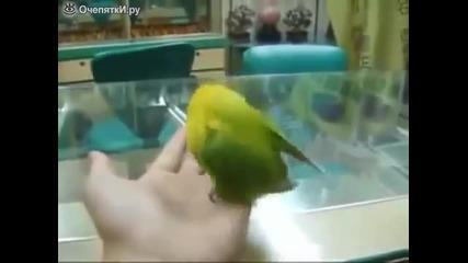 Папагал издава звуци на сек*