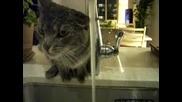 Къде се къпят котките? - Смях