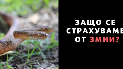Защо се страхуваме от змии