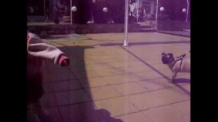 дете и кученце си играят