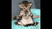 Най - Сладките Животинчета На Света