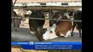 Ветеринарите излизат на протест