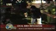 Птички Се Изсират На Репортер В Устата 100