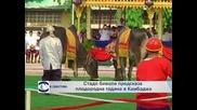 Стадо биволи предсказаха плодородна година за Камбоджа